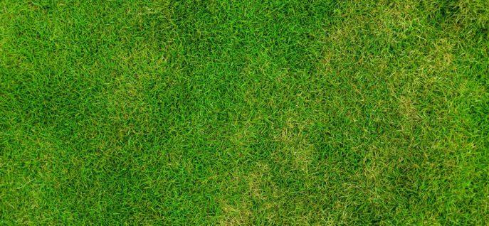 grass-84622_1280